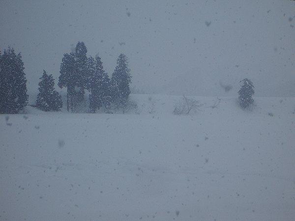 魚沼産コシヒカリの田んぼでは雪が降っています