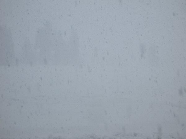 午後になって雪の降り方が強くなってきました