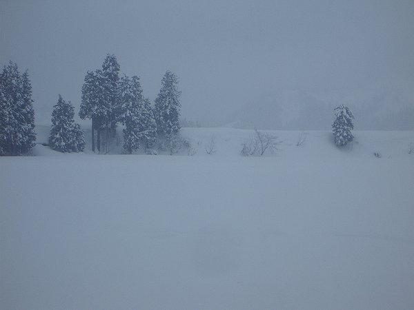年が明けてから魚沼産コシヒカリの田んぼではたくさん雪が降っています