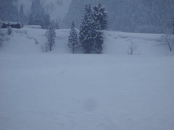 昨晩から10cmくらい雪が積もりました