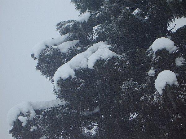 今日の新潟県南魚沼市は厳しい寒さです