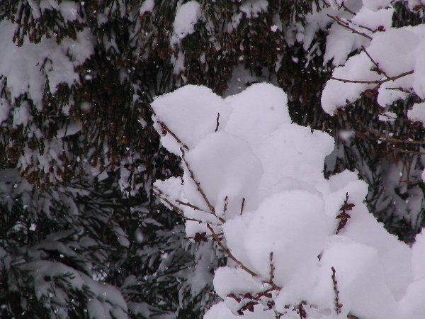 新潟県南魚沼市では昨晩から30cmくらい雪が積もりました