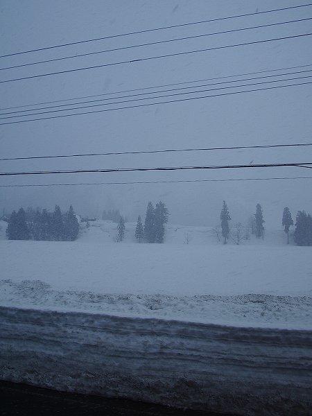 今朝の魚沼産コシヒカリの田んぼは吹雪です