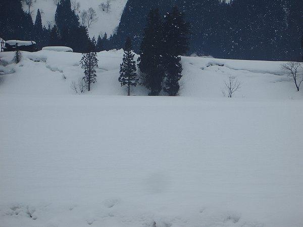 魚沼産コシヒカリの田んぼは雪が止んでいて静かです