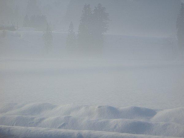 魚沼産コシヒカリの田んぼは霧に包まれています