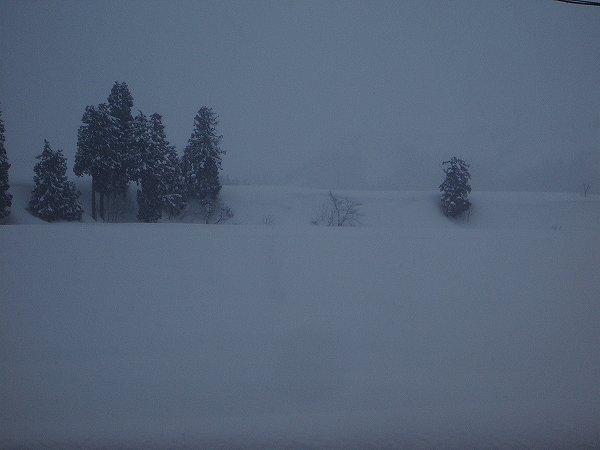 魚沼産コシヒカリの田んぼでは今日もまたたくさん雪が積もりました