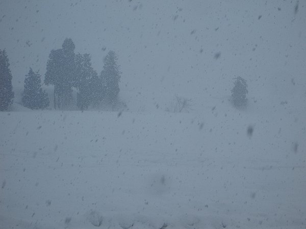 魚沼産コシヒカリの田んぼでは湿った雪が降っています