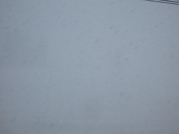 魚沼産コシヒカリの田んぼでは昨日から 40cm くらいの雪が積もりました