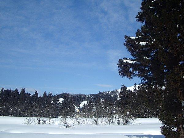 水無川の2月の雪景色