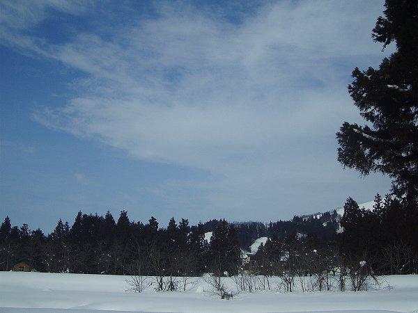 昨日に続いて青空が見えるいい天気になっています