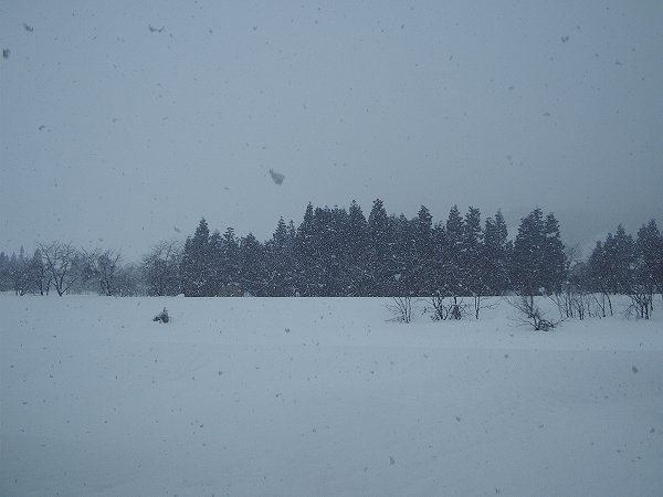 水無川はすっかり雪で覆われています