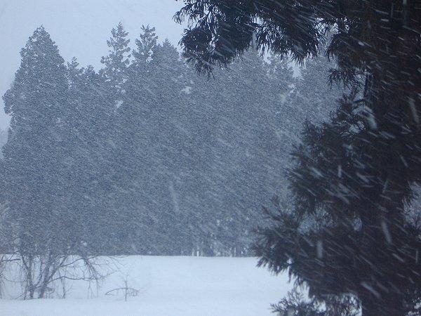 今朝の新潟県南魚沼市は吹雪です