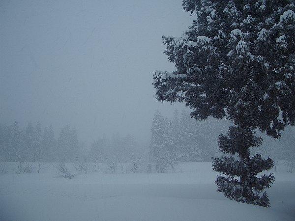 激しく雪が降っています