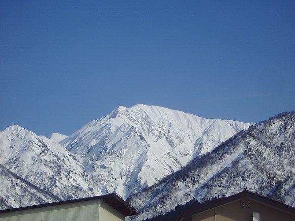 真っ白な駒ケ岳が青空にくっきりと映えています