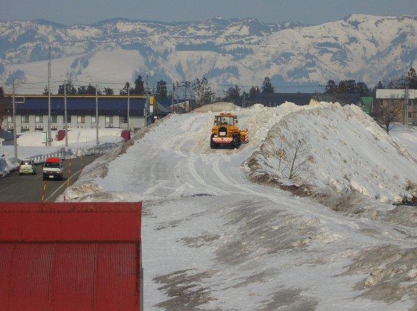 水無川の雪捨て場では雪がかなりの高さになっています