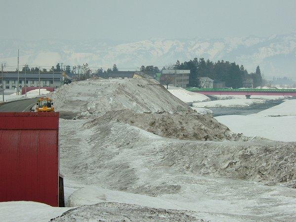 水無川の雪捨て場が春らしい風景になっています