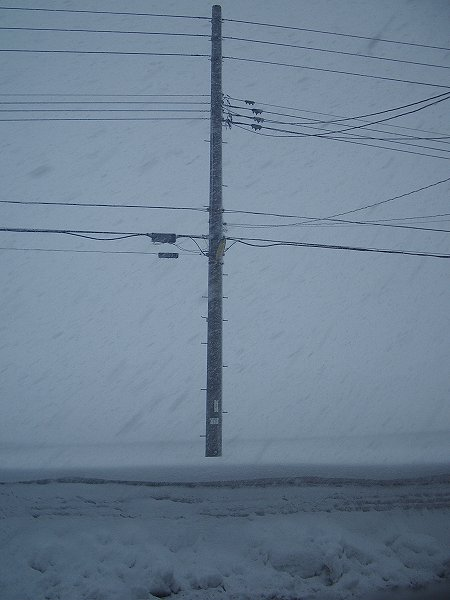 魚沼産コシヒカリの田んぼは激しく雪が降って視界が悪くなっています