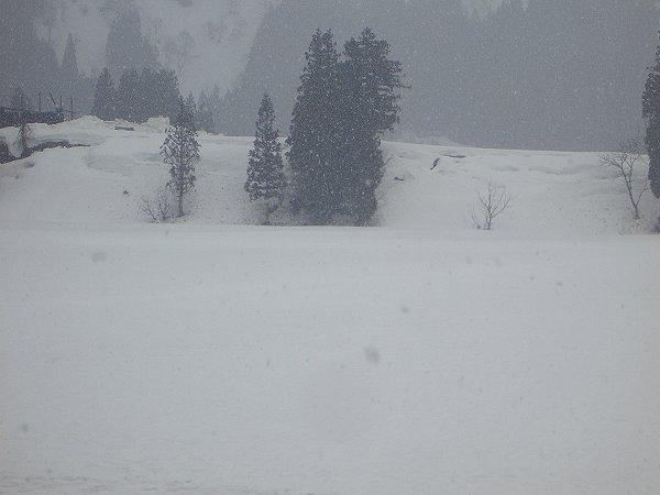 今朝は雪が降っています