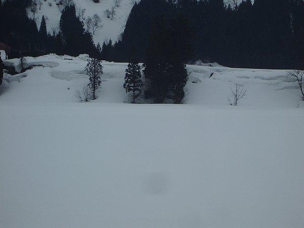 ちらほらと雪が舞っています