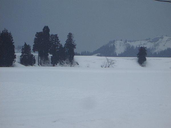 魚沼産コシヒカリの田んぼでは昨晩から少し雪が積もりました