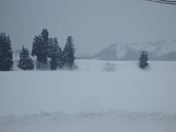 魚沼産コシヒカリの田んぼに2日間降り続いた雪が止んでいます