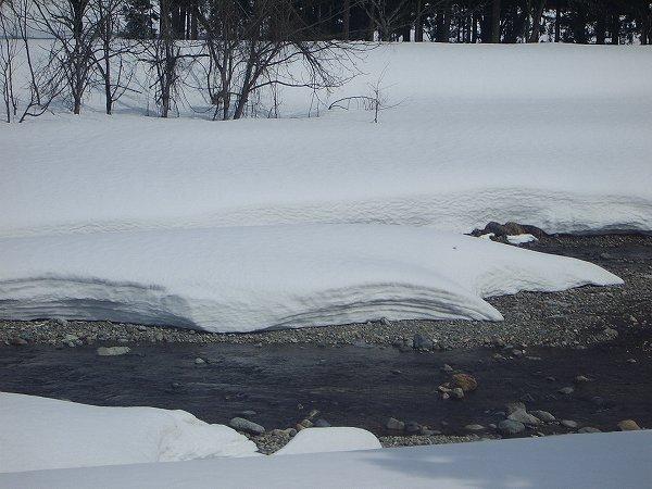 水無川で雪解けが進み、川底がだんだん見えてきています