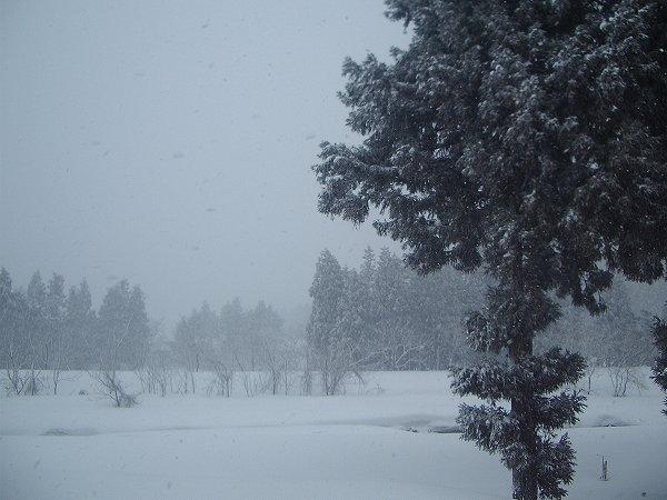 今日の新潟県南魚沼市は吹雪です