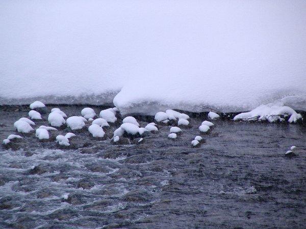 昨晩から今朝にかけて雪が20cm近く積もりました