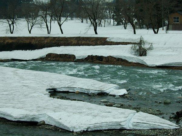 水無川の土手の雪はどんどん消えています