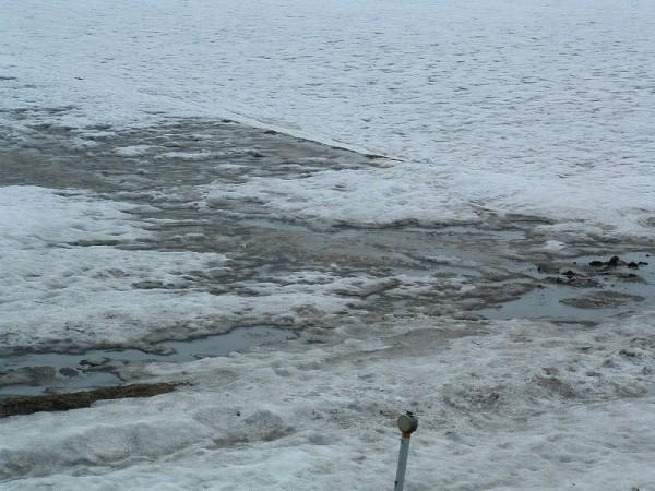 雪解けが進み、田んぼの土が見えてきました