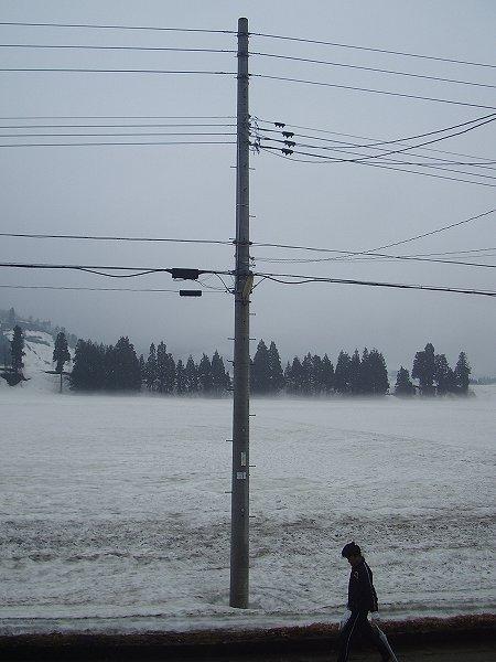 魚沼産コシヒカリの田んぼは雨降りで気温が低いです