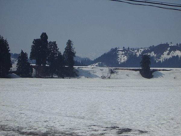 魚沼産コシヒカリの田んぼでは雪解けが進んで畦が出てきました