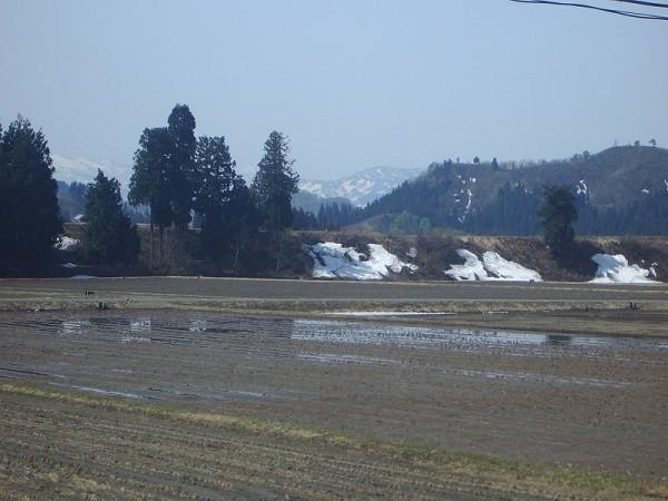 今朝もいい天気の魚沼産コシヒカリの田んぼ