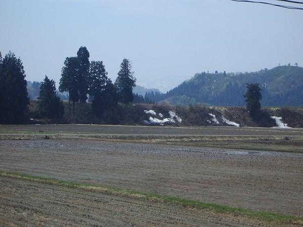 4月末の魚沼産コシヒカリの田んぼ