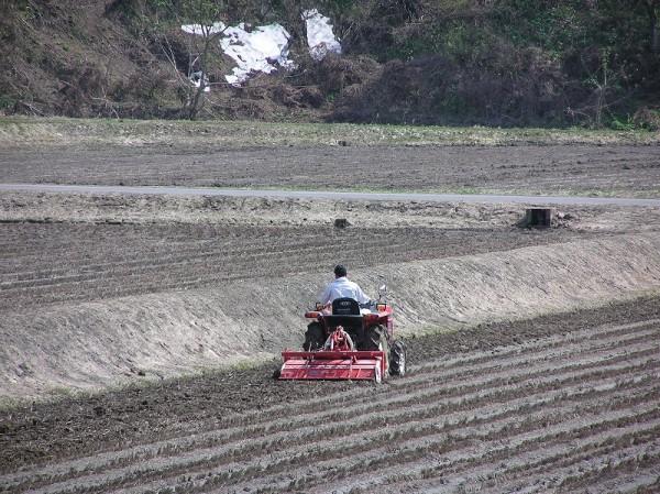 トラクターによる田起こし作業が始まりました