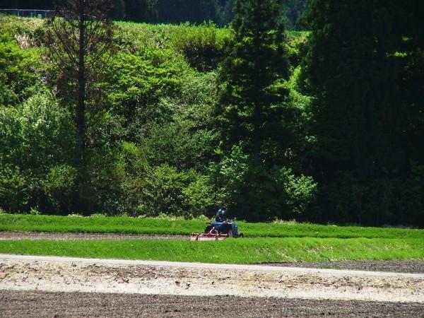 田んぼでトラクターによる田起こし作業が行われています