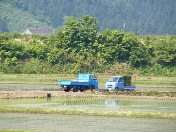 魚沼産コシヒカリの田植え作業が行われています