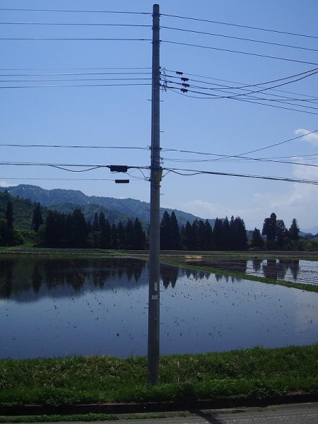 水が張られた魚沼産コシヒカリの田んぼ