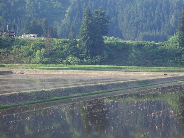 魚沼産コシヒカリの田んぼは朝から澄んだ青空が広がっています