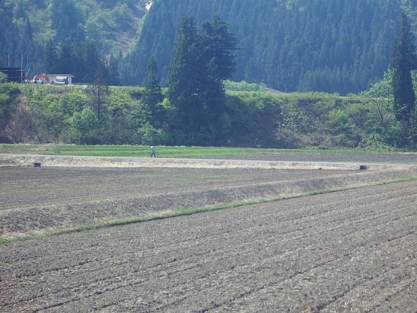 新潟県南魚沼市は好天の農作業日和が続いています