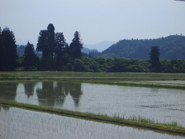 魚沼産コシヒカリの田んぼは夏を感じる暑さです