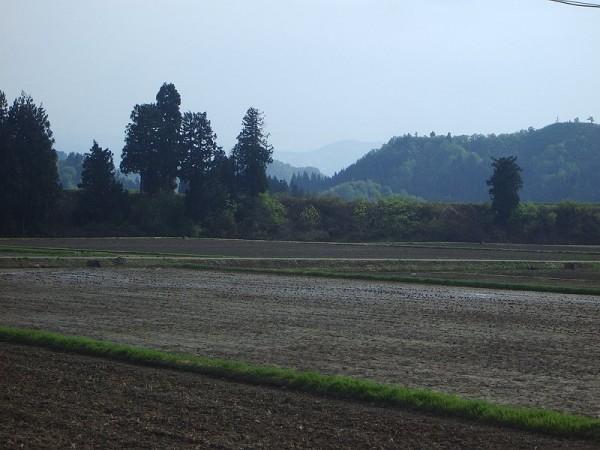 魚沼産コシヒカリの田んぼはいい天気で過ごしやすい一日でした