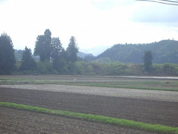 魚沼産コシヒカリの田んぼは午後から晴れてきました