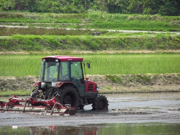 田んぼで代かき作業が行われています