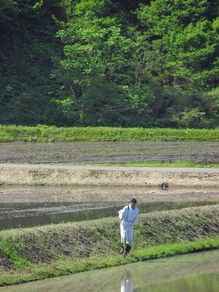 田んぼの畦の草刈りをしている人
