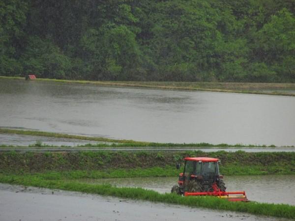 雨の中でトラクターによる代かき作業が行われています