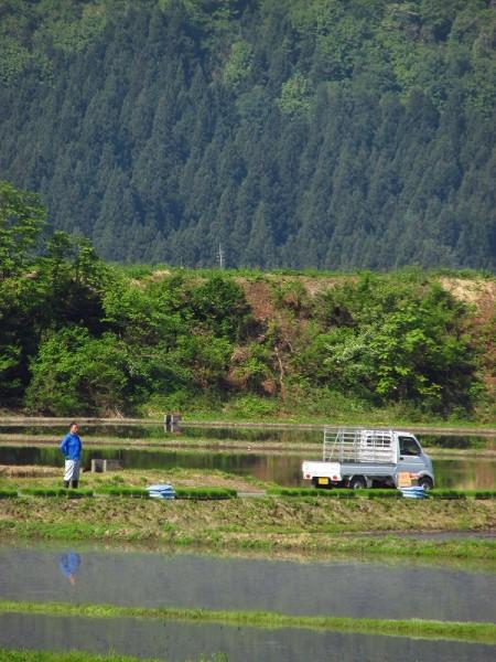 魚沼産コシヒカリの田植えが始まりました