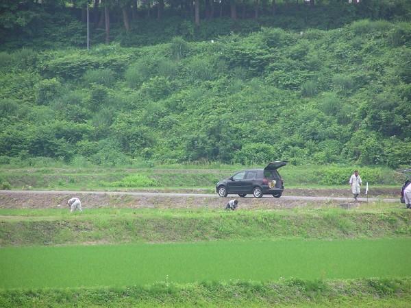 田んぼで数人が作業をしています