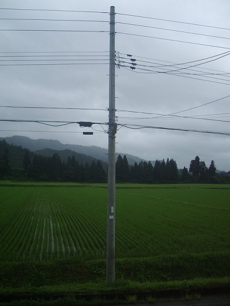 雨降りで肌寒く感じる一日でした