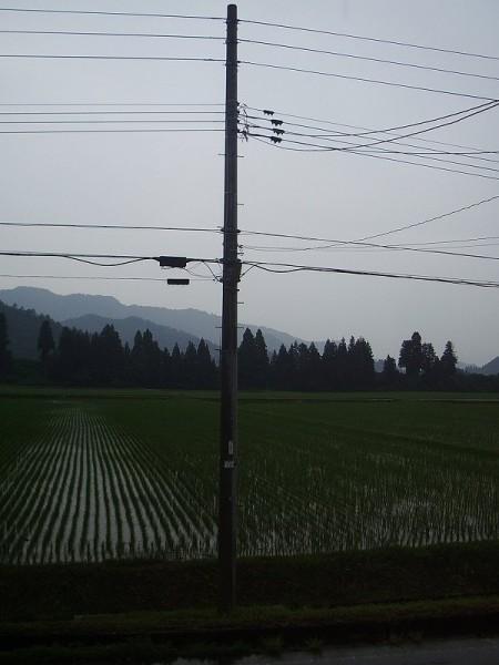 雨のおかげでいっきに涼しくなりました